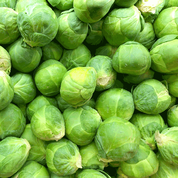frozen brussels sprouts choice grade bulk tote bins monteagle brand simpplier